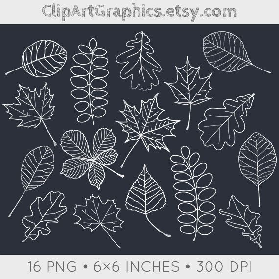 Digital Chalkboard Leaves Clip Art Fall Chalk by ClipArtGraphics