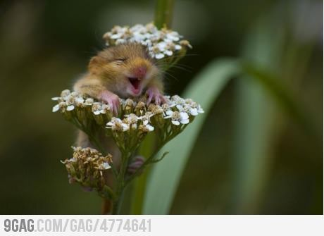 Awww Yeah Flowers!Mice, Happy Face, So Cute, Hamsters, So Happy, Baby Animal, Smile, So Funny, Flower