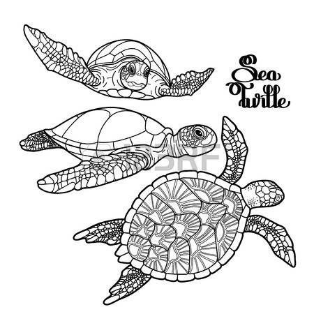 tatuaggio tartaruga: Graphic collezione Hawksbill tartaruga marina disegnato in stile art linea. creature dell'oceano vettore isolato su sfondo bianco. disegno da colorare pagina del libro