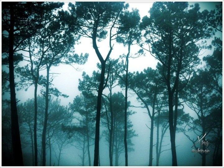 Streamzoo photo - Misty trees
