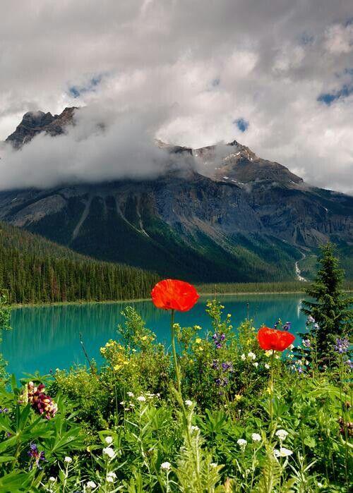 Divoké kvety,Britská Kolumbia,Kanada