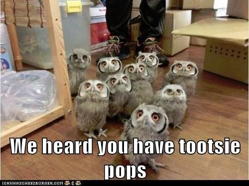 authentic sneakers online We heard you have tootsie pops    so many adorable owls