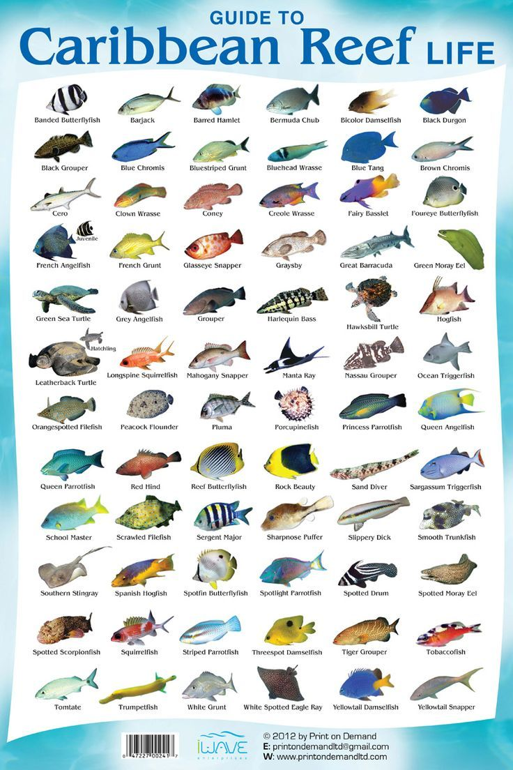 This is a Coral Reef Fish Species Chart so you know what what #Cancun Fish Species you can find while diving in our beautiful reefs, not only in Cancun, but in the Riviera Maya as well (Besides Diving with Sharks, Bull Sharks!). Continue reading