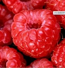 100% High Quality Raspberry Seed 100pcs Super Big Raspberry Seeds Fruit Seeds flower pots Strawberry  bonsai Blackberry(China (Mainland))