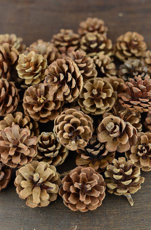 best fayuchris images on pinterest bouquet flowers flowers