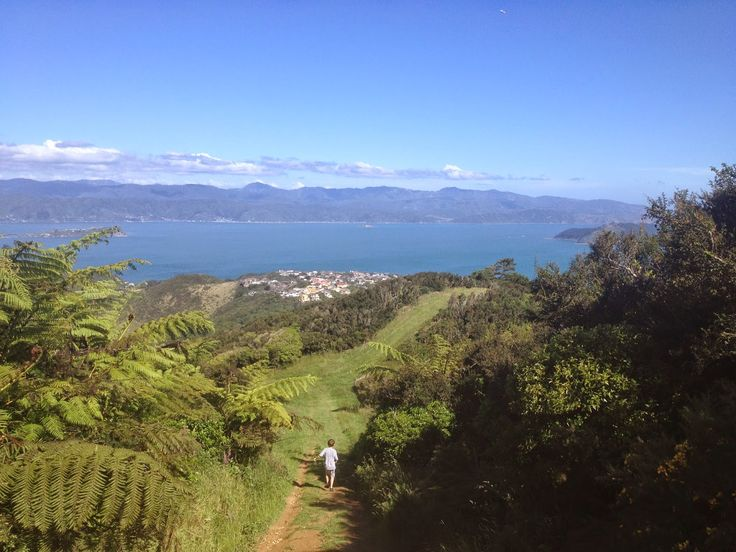 LAVENDER AVENUE: Tramping Around Wellington - Mount Kaukau A gorgeous walk with multiple trails and views to die for.