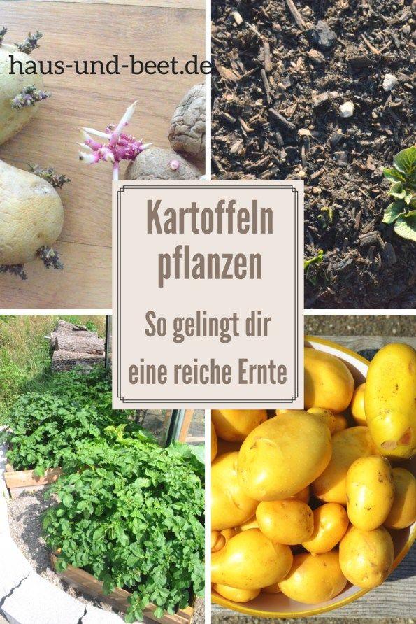 Kartoffeln pflanzen – So gelingt dir eine reiche Ernte – Maria Dausner