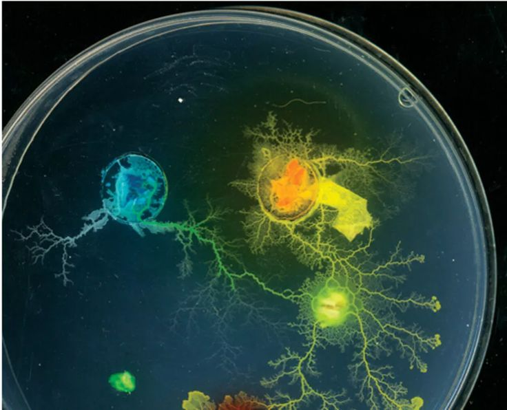Why Living Cells Are The Future Of Data Processing | Popular Science