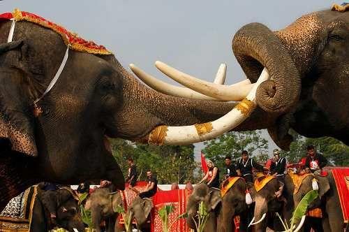 Attualià: ##Thailandia la #lotta degli elefanti durante il #S... (huffpostitalia) (link: http://ift.tt/2n3EH4h )