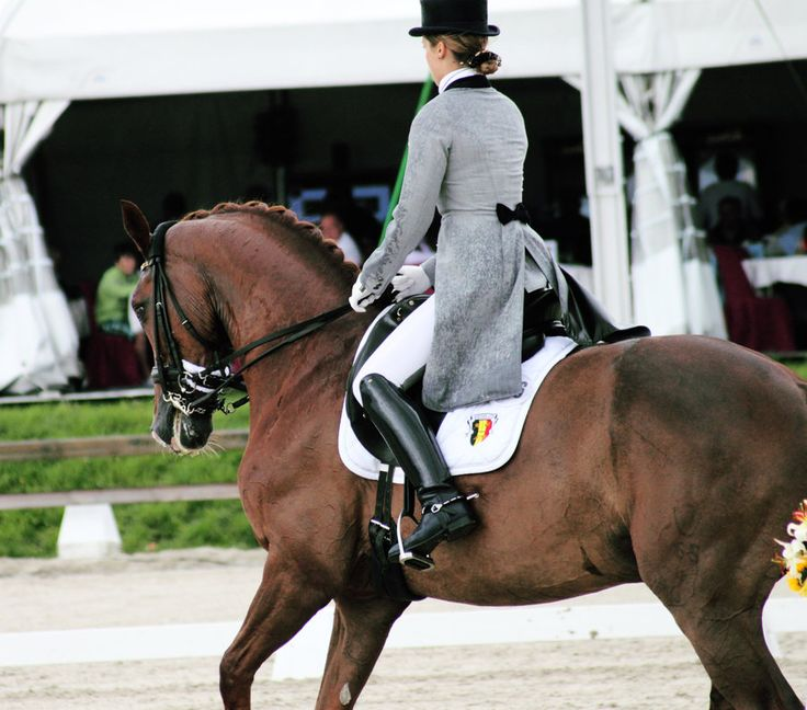 1000 Images About Show Coats On Pinterest Dressage