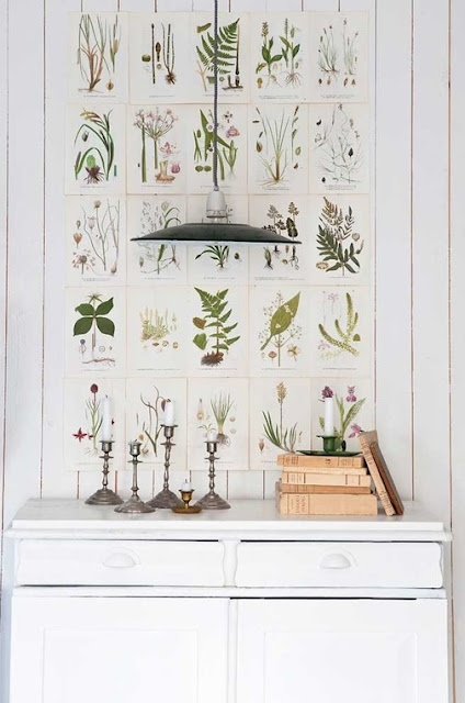 Botanical Inspiration. Paste pages from a botanical book to a board and frame for a big statement instead of framing each picture.