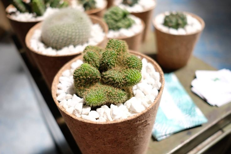 Cactus et pot en liège -  les others