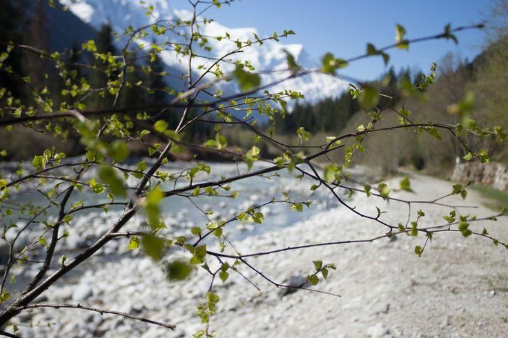 L'Arve au printemps