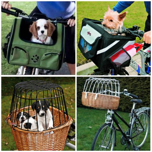 ¿Pasear al perro en bicicleta? 4 formas y accesorios