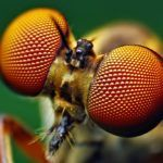 Stanford Researchers Mimic Structure Of Insects Eyes To Make Perovskite Solar Cells More Durable