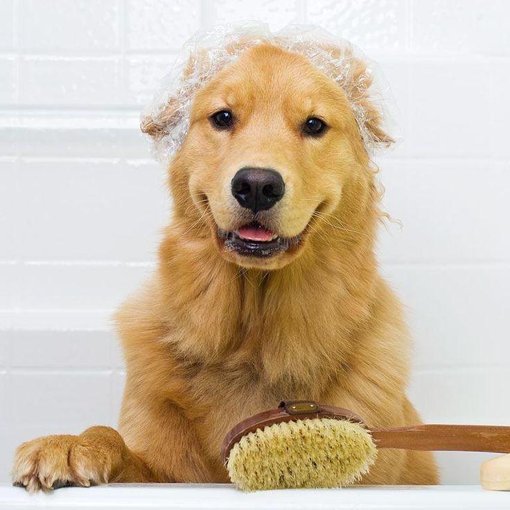 Toilette du chien : de quoi a-t-il vraiment besoin ? | Max et Caramel