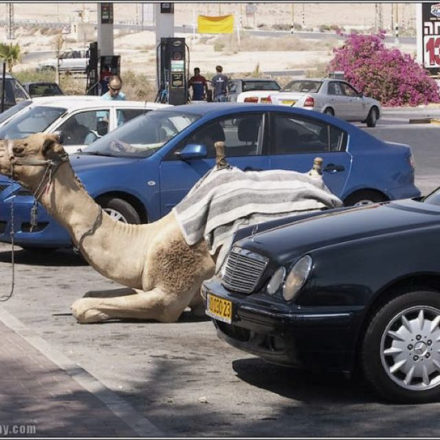 Only in Israel ....