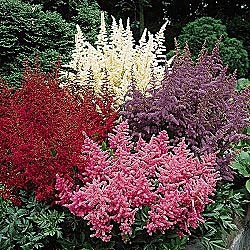 47 best plants zone 9 images on pinterest blossoms for Perennial garden design zone 9