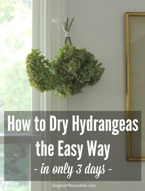 This is the easiest way to dry hydrangeas! They look so pretty all over out Blue Cottage. DagmarBleasdale.com #DIY #garden