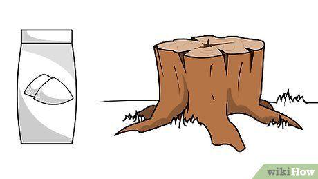 Plus de 25 id es magnifiques dans la cat gorie detruire souche sur pinterest detruire une - Comment detruire une souche d arbre ...