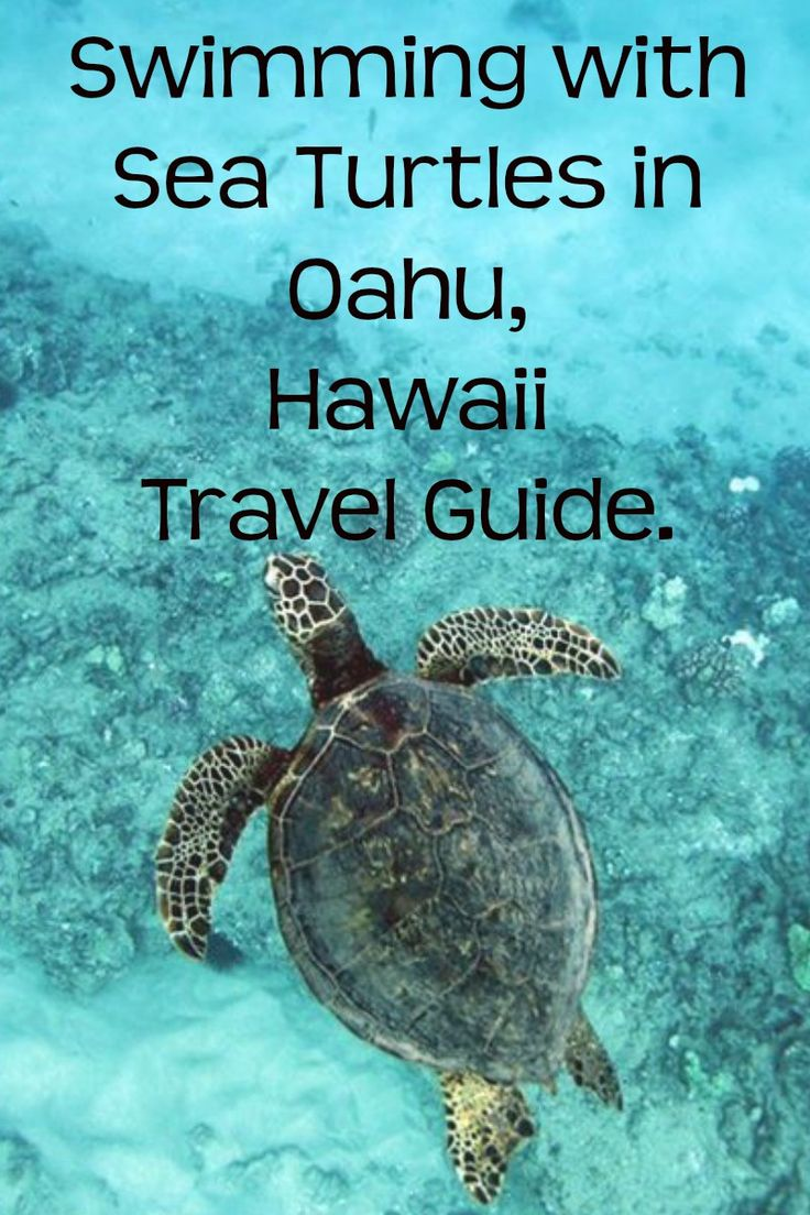 The ultimate Hawaii Travel guide to help you swim with Sea Turtles on the island of Oahu, Hawaii.  You can also read where the best accommodation places are, where to eat and more! Don't forget to re-pin if you found it helpful!
