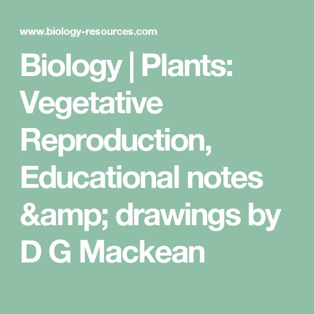 Biology | Plants: Vegetative Reproduction, Educational notes & drawings by D G Mackean