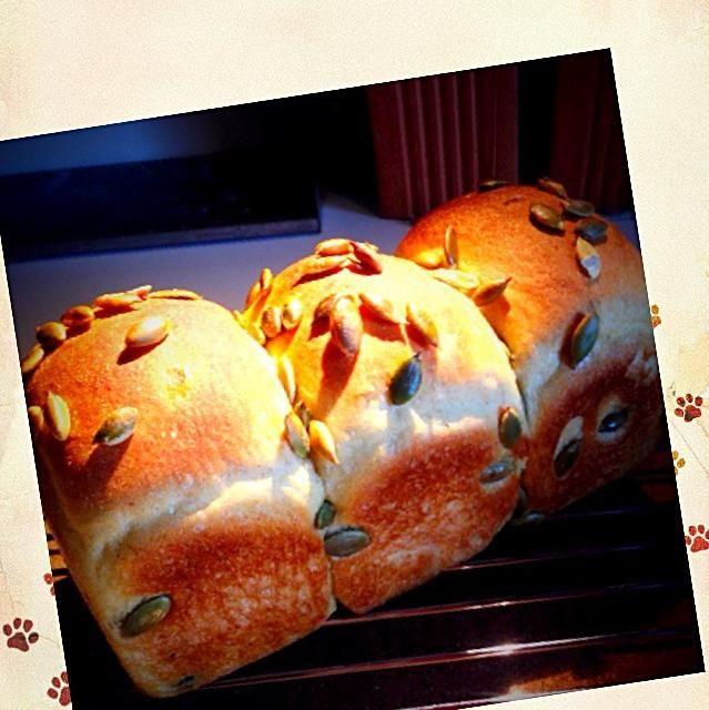 皮と種を取り除いたカボチャと牛乳を生地に練り込みました。 ので、油脂成分は無しでもしっとりとしたパンになっております。  昨今のバター不足の影響を考えてと、やっぱり冬場は油脂成分を入れると冷たさでパンが固くなってしまう為に考えたパンです。  冷めたパンを食べる旦那のお弁当用(=^ェ^=) - 65件のもぐもぐ - グリーンレーズン酵母からのカボチャの食パン by たいち
