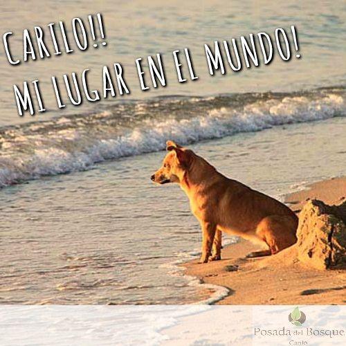 CUANDO ENTEDES QUE NO PRECISAS NADA MAS QUE EL BOSQUE, LA ARENA Y EL MAR!. CARILO TE ESPERA! #bosque #playa #verano17 #enero #descanso #posadadelbosque #amocarilo #milugarenelmundo #amolaplaya #amoelbosque