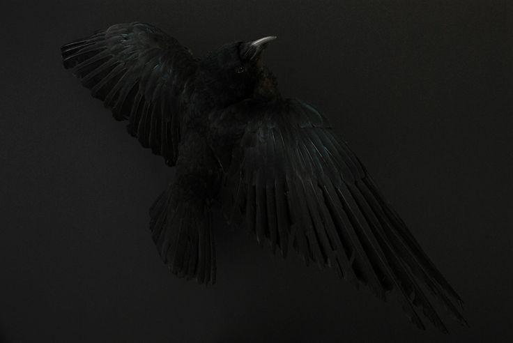 "Enchanting Nature - ""The Dark Side"""