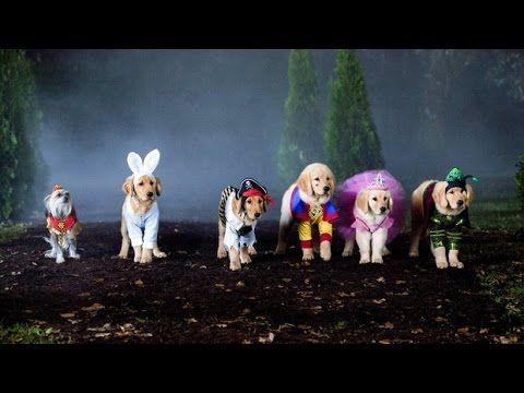 Spooky Buddies Der Fluch des Hallowuff Hunds - ganzer Film auf Deutsch - YouTube
