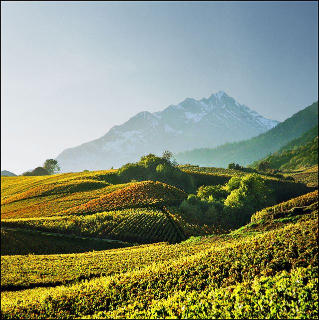 Alpine vineyards    Sion (German Sitten, Latin Sedunum) is the capital of the Swiss canton of Valais. As of December 2009 it had a population of 29,718.  Landmarks include the Basilique de Valère and Château de Tourbillon.    en.wikipedia.org/wiki/Sion,_Switzerland
