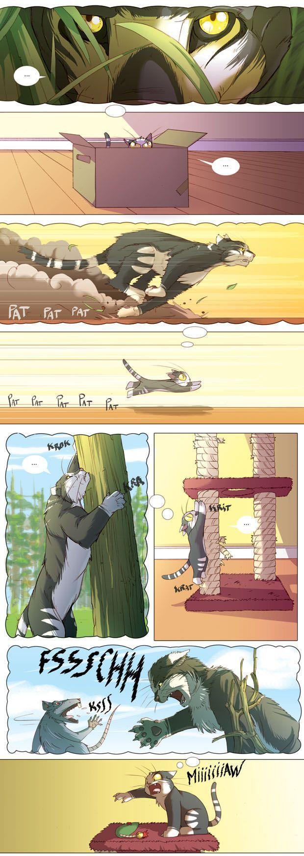 Cat imagination - 9GAG
