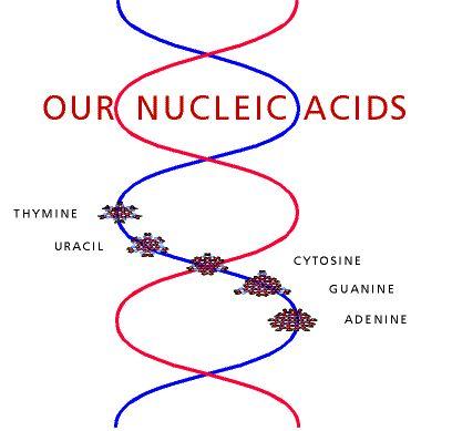 17 Best images about Macromolecules- Paul Coates on Pinterest ...
