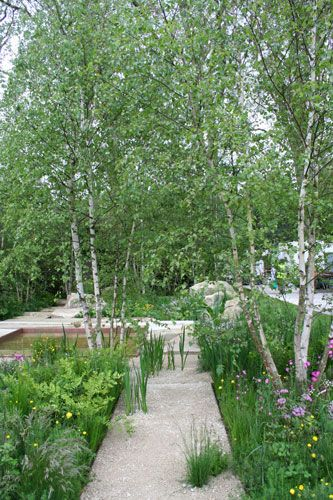 25 best ideas about chelsea flower show on pinterest for Silver birch trees for small gardens