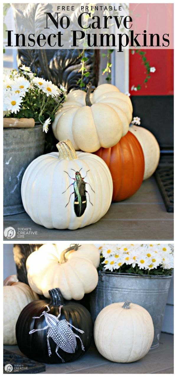 Creative Pumpkin Decorating Ideas HOME Creative Fall Ideas