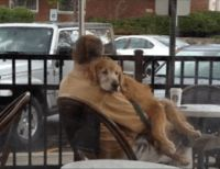 Este homem estava na rua com seu cão, quando começou a chover forte. O que ele fez com o bicho emocionou o mundo.
