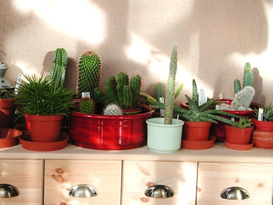 Cactus Plants And Feng Shui Decorating