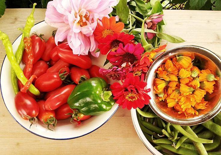 Gemüse-Tipps für Schrebergarten Anfänger. Dieses Gemüse gedeiht ohne großen Aufwand und ohne Probleme in den meisten Gärten und Gegenden.