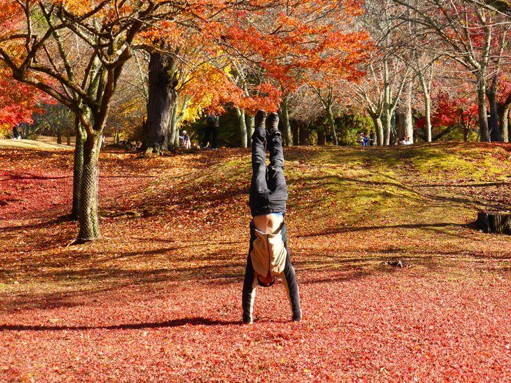 Nara Park sakadachi, Nov 2014