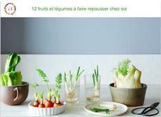 Ne jetez plus vos salades, carottes ou oignons verts ! Voici comment faire repousser indéfiniment certains légumes, herbes ou fruits chez vous. Nul besoin
