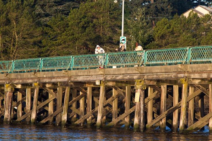 Herring fishing off the Craigflower Bridge