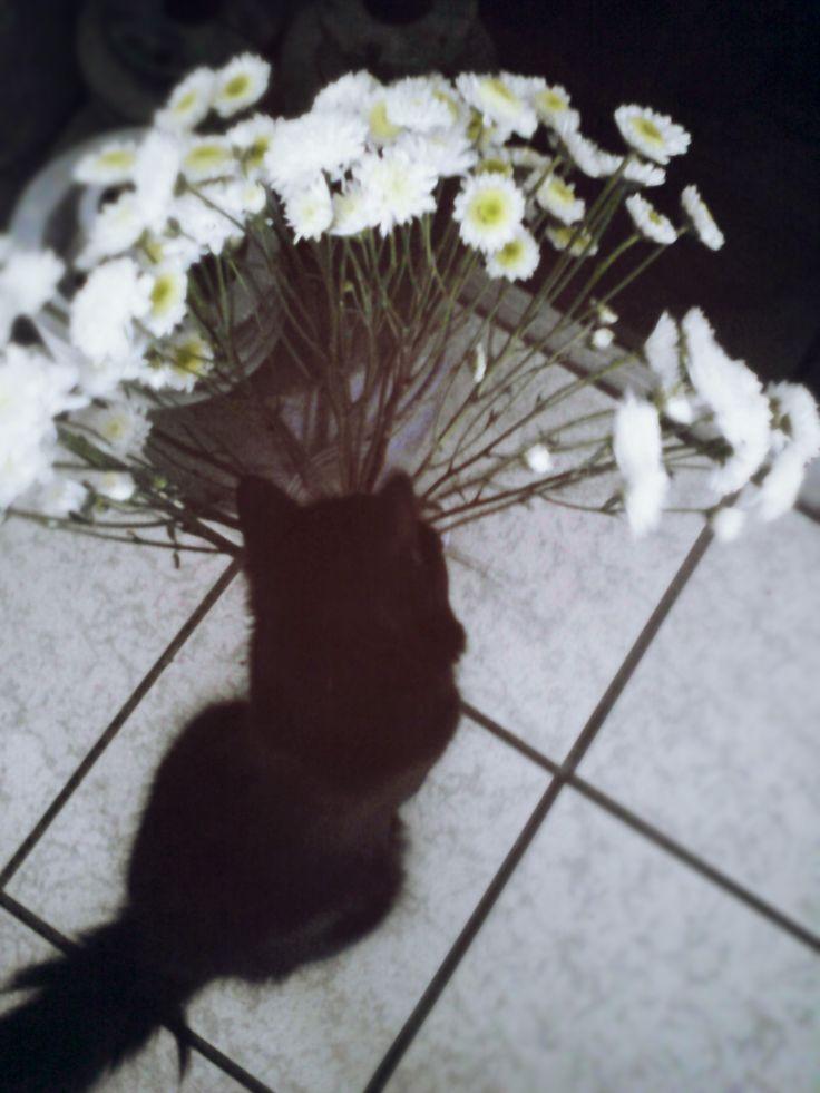 el gato romántico . .