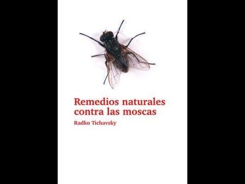 ▶ Remedios naturales contra las moscas - YouTube