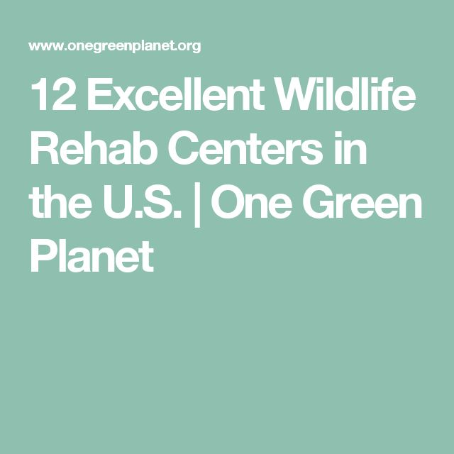 12 Excellent Wildlife Rehab Centers in the U.S. | One Green Planet
