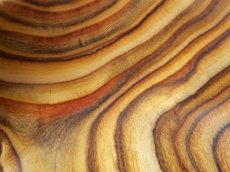 Best wood identification images on pinterest
