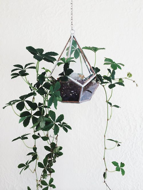 I love the way the plant dangles over the terrarium!