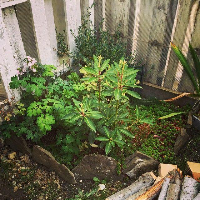 Arreglo jardin concepto magallnico - canelo y retamo