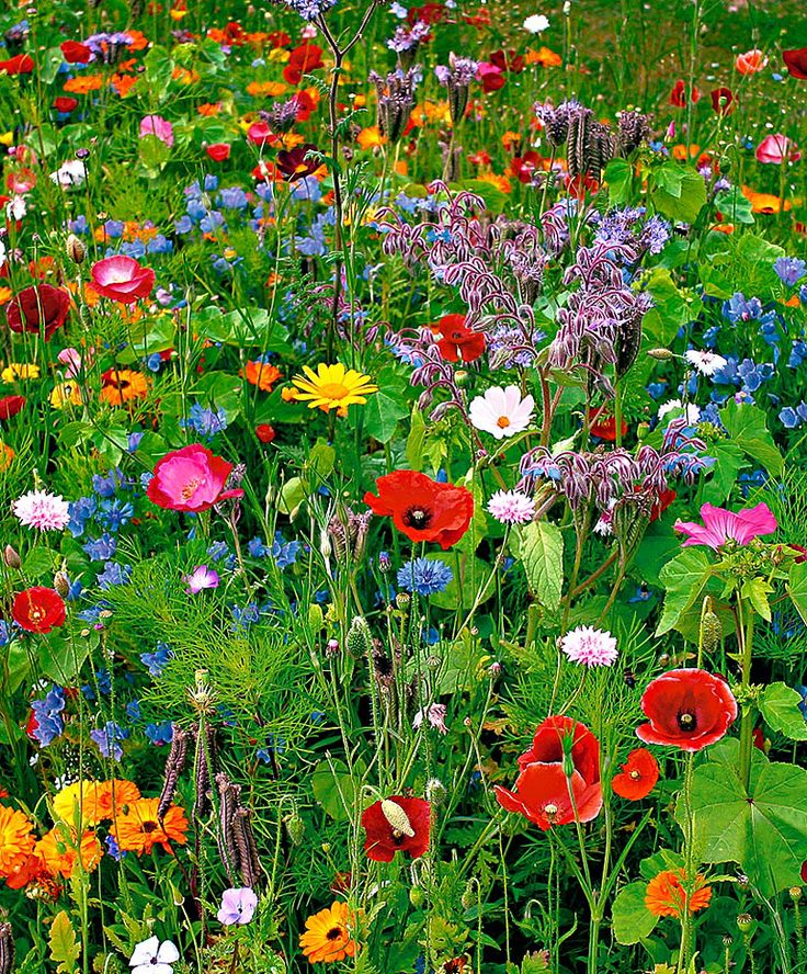 17 Best ideas about Wild Flower Gardens on Pinterest English