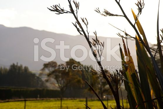 Rural New Zealand by Dusk royalty-free stock photo