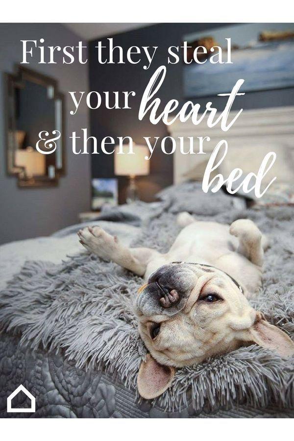 Citaten Zomer X : French bulldog love franse bulldog love hondenliefhebbers